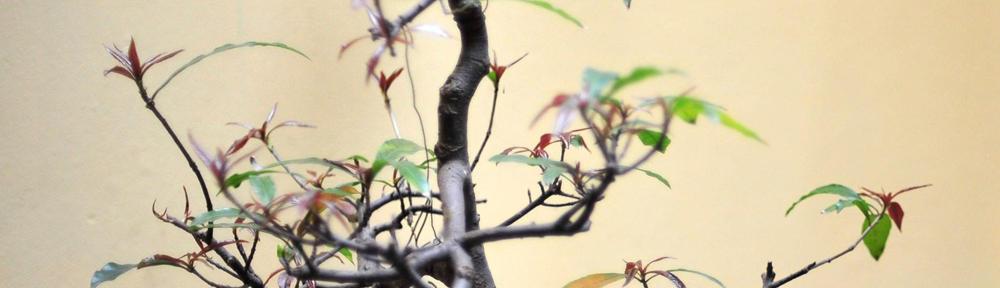 Shan Pin Koh's Blog